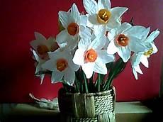 gio fiore narciso fiore singolo per la casa e per te decorare