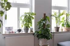 Fensterbank Deko Ein Kleiner Dschungel In Unserer Wohnung