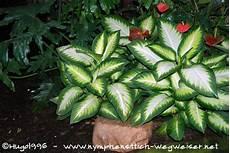 giftige zimmerpflanzen baby giftige zimmerpflanzen gefahr f 252 r babys und kleinkinder