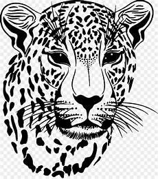 Macan Tutul Jaguar Macan Tutul Salju Gambar Png