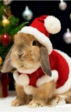 cute rabbit ready for christmas more at megacutie co uk cute baby bunnies pet bunny cute