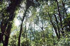 Tentang Hutan Kalimantan Profauna