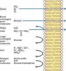 why is the cell membrane permeable to lipid soluble molecules quora