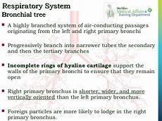 respiratory system training