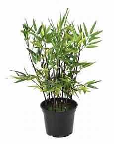 bambou d intérieur bambou artificiel arbuste cannes vertes plante d