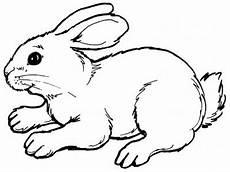 10 Sketsa Gambar Kelinci Hitam Putih Untuk Anak Tk Dan