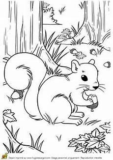 Virina Malvorlagen Quotes Wald Tiere Malvorlagen Tiere Tiere Des Waldes