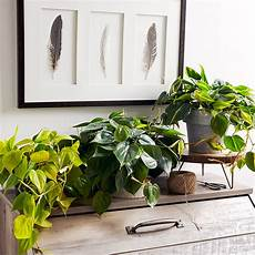 indoor plants for low light better homes gardens