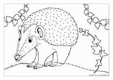 malvorlage igel a4 kinder zeichnen und ausmalen