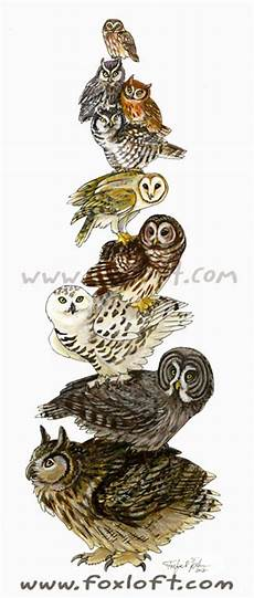 owl stack by foxfeather248