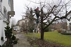 bäume schneiden bei gartenarbeiten liegenschaftenunterhalt und h 228 ckseldienst