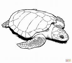 Turtle Coloring Sheet Snapping Turtle Coloring Pages At Getcolorings Free