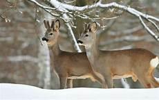 Tiere Im Winter Mecklenburgs Lieblinge All Season Parks
