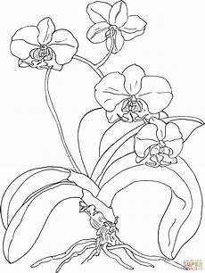 orquidea de venezuela para colorear phalaenopsis ou orqu 237 dea mariposa super coloring desenhos de orquideas flores para colorir