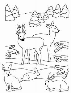 hirsche und hasen im wald ausmalbild malvorlage winter