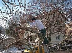 bäume schneiden bei kundeng 195 rtner alex fiore 4623 neuendorf