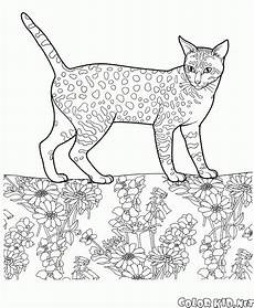 Katzen Malvorlagen Name Malvorlagen Katzen