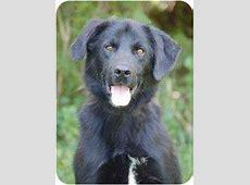 Trigger   Adopted Dog   Mora, MN   Labrador Retriever