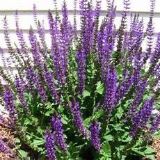 pflanzen für bienen und schmetterlinge balkon blumen retter f 252 r bienen hummeln und