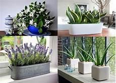 Les 5 Plantes Parfaites Pour La Chambre 224 Coucher Dormez