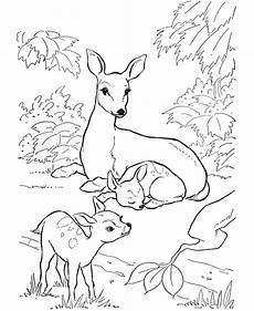 Deere Malvorlagen Review Free Deer Coloring Pages Coloring Home