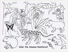 Ausmalbilder Regenwald Tiere Ausmalbilder Tiere Im Dschungel Inspirierend Ausmalbilder