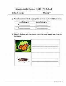 grade 3 science worksheets insects 12532 environmental science evs insects worksheet class ii