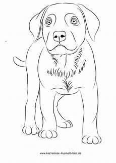 Kostenlose Malvorlagen Hunde Malvorlagen Hunde Labrador X13 Ein Bild Zeichnen
