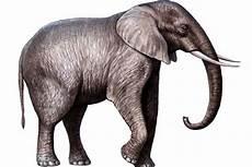 Saturday Diary The Tragic Of Tyke The Elephant