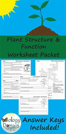 plant structure and function worksheets middle school biology structure function leaf