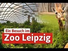 Gutschein Zoo Leipzig - zoo leipzig st 228 dtereise mit elefant tiger co