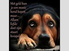 Zieer.nl   grappige plaatjes, grappige foto's, grappige