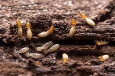 The 7 Sure Signs Of Termite Activity In Your Home Signs