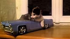 en voiture chat en voiture