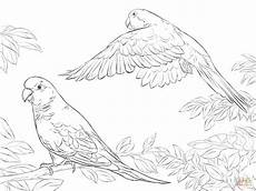two quaker parrots coloring page free printable coloring