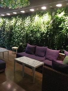 parete giardino parete fatta di piante foto di giardino lounge e