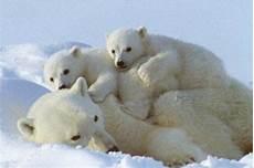 les animaux en voie de disparition 17 best images about animaux en voie de disparition on