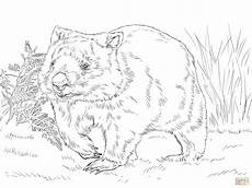 Malvorlagen Zum Ausdrucken Wombat Common Wombat Coloring Page Free Printable Coloring Pages