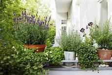 Lavendel Im Topf Perfekt F 252 R Balkon Terrasse