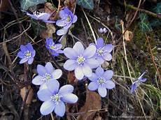 fiori lilla nomi le avventure della fantasia i fiori selvatici