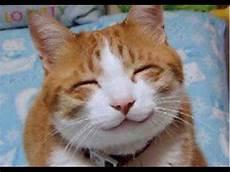 Lustige Bilder - lustige katze top 10 katzen fails katzen 3