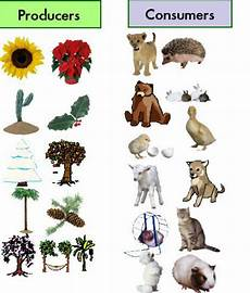 plants as producers worksheets 13617 food chains mrfrausto