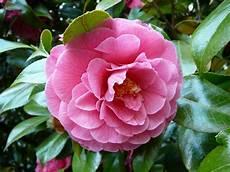 fiori profumati da giardino alberi da fiore piante da giardino alberi da fiore