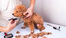 dog grooming prices how much does it cost to groom a dog in salons