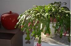 plante grasse d appartement pivoine etc