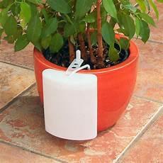 zimmerpflanzen im urlaub bewässern zimmerpflanzen gie 223 en im urlaub
