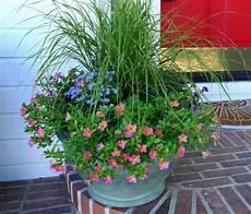 welche blumen im februar pflanzen balkon my flowers