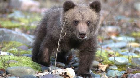 Drowning Bear Cub Rescued By Fisherman In Pennsylvania
