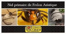 comment trouver un nid de frelon le frelon asiatique et sa cr 233 ation