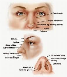 Anatomi Dan Fisiologi Hidung Dan Sinus Paranasalis
